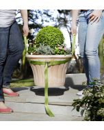 Sangle de transport pour plantes