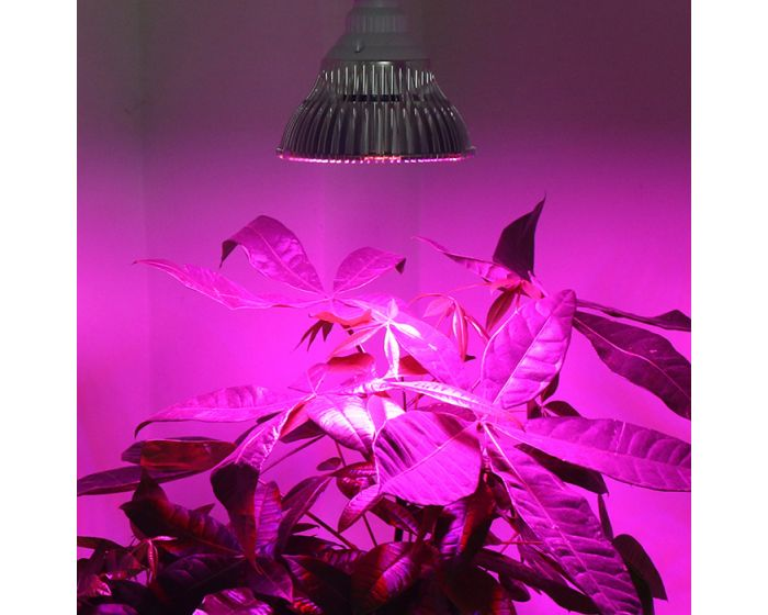 Lampe Led Horticole Super Grow Bio Green World